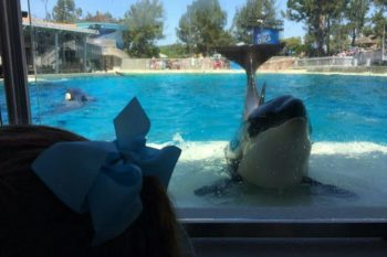 The Best Lunch Spot this Summer is with Shamu! ~Sponsored Post